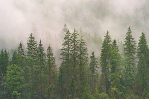 Elati-pixabayfreefoto-wood-3082836_1920