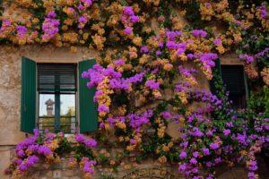 Sirmione-freepixabayfoto-flowers-3690991_1920