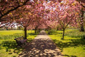 London-pixabayfreefoto-park-737228_1920