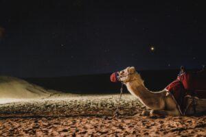 Dubai-freepixabayfoto-camel-4948299_1920