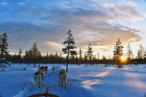 Finnland-freepixabayfoto-husky-4839700_1920