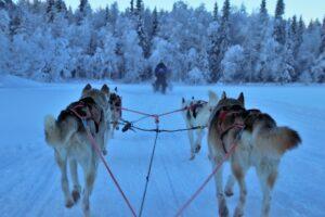 Finnland-freepixabayfoto-sled-3953650_1920