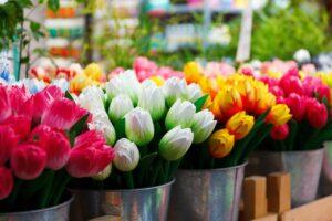 Amsterdam-freepixabayfoto-flower-69490_1280