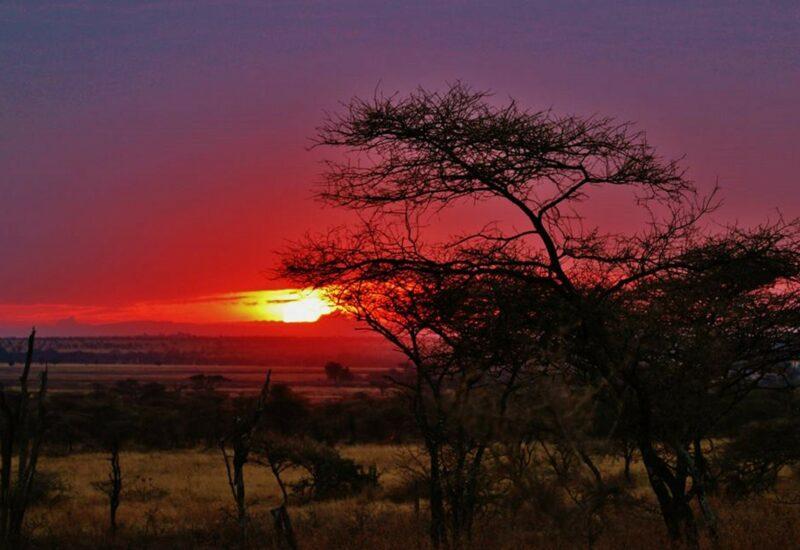 zanzibar-freepixabayfoto-tanzania-300472_1920