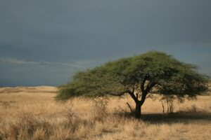 zanzibar-freepixabayfoto-tree-1148960_1920
